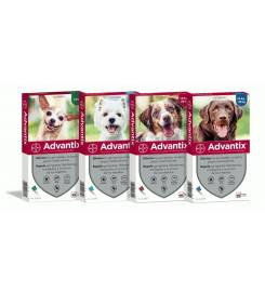 ADVANTIX SPOT-ON PER CANI OLTRE 25KG. 4 PIPETTE