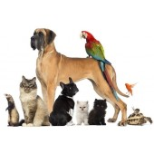 Pet Shop: food and accessories for dogs, cats and other animals