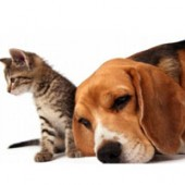 Dogs and cats: everything you need for your dogs or cats.