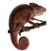 Reptiles: everything you need for your reptiles.